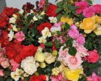 Počinje prolećni ciklus cvetnih pijaca