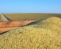 U sedmici za nama zabeležen rast cena soje i kukuruza