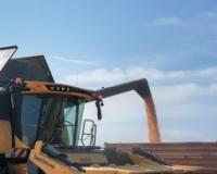 Na Berzi u Novom Sadu i ove nedelje nastavljen rast cena i žitarica i uljarica
