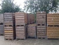 Neophodno kvalitetno skladištenje za duže čuvanje krtola