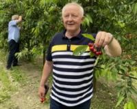 Dan polja trešnje u Karavukovu: Voćarska poezija pretočena u praksu