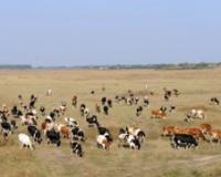 Popis svih pašnjaka u Srbiji