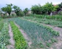 Organska poljoprivreda i životna sredina