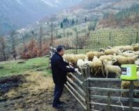 Netaknuta priroda presudna za kvalitet sira i mesa