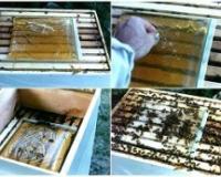 Što pre obezbediti pčelama hranu