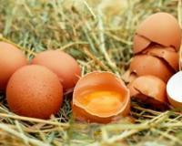 Pravilniku o kvalitetu jaja stupa na snagu polovinom godine