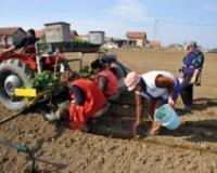 Obuka poslodavaca u poljoprivredi o angažovanju sezonskih radnika