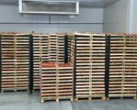 Lakši izvoz voća i povrća iz Srbije u Rusku Federaciju