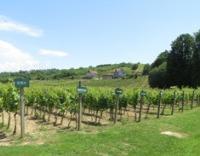 Čuvari tradicije župskog vinogorja