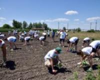 Mladi akcijaši posadili hektar futoškog kupusa