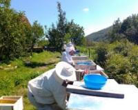 Deset pčelarskih zapovesti