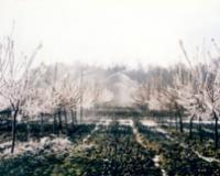 Osiguravajuće kuće ne(priznaju)  štetu u zasadima nastalu zbog  mrazeva koji se pojave u perodu od 1. marta do 4. aprila