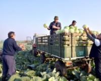 PDV nadoknada i za poljoprivrednike