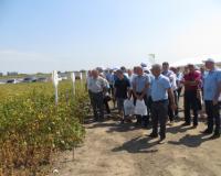 Dan polja Selsem Soje