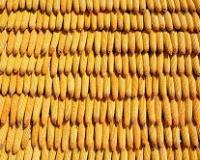 U nedelji na izmaku pad cene kukuruza