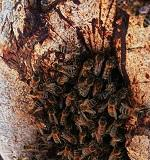 Dobra ventilacija ključna za vitalnost pčela