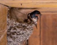 Počelo takmičenje za izbor domaćinstva sa najviše lasta