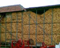 Važna za očuvanje količine i kvaliteta zrna