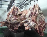 Iran zainteresovan za meso, kukuruz i seme iz Srbije