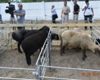 Skup ovčara centralne Azije i Rusije