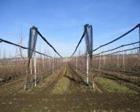 Sufinansiranje investicija u voćnjacima, vinogradima i hmeljarnicima