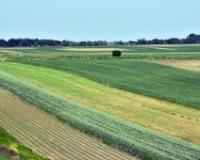 Ministarstvo za osnovne podsticaje po hektaru opredelilo 7,5 milijardi dinara