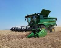 U žetvu pšenice iz