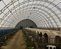 Farma, uprkos ledenoj klimi, obara rekorde u proizvodnji mleka