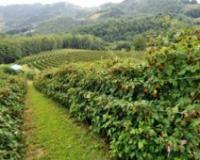 Opština Bajina Bašta pomaže poljoprivrednicima pri ulaganju u fizičku imovinu