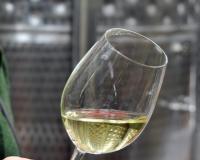 Proizvođači iz Srbije na festivalu oranž vina u Sloveniji