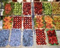 Podrška izvozu voća i povrća na tržište SAD