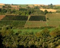 Vikend u Rivici u znaku vina