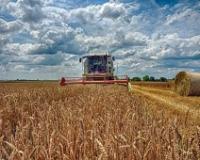 Kalkulacije ZSV - cena koštanja pšenice 21,06 din/kg