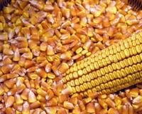 Rast cena kukuruza i soje