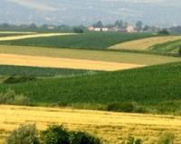 Za podršku poljoprivredi 2,6 milijardi dinara