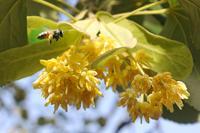 Gradski pčelari proizvode med i čuvaju okolinu