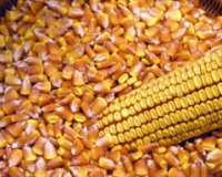 Ministarstvo dalo prognozu cena deset poljoprivrednih proizvoda u 2020. godini