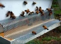 GRABEŽ NA PČELINJAKU