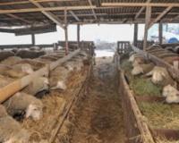 Blagovremena priprema za hladne dane čuva zdravlje životinja