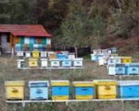 NEOPHODNO OSNIVANJE CENTRA ZA PČELARSTVO