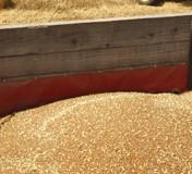 Dogovoren početak izvoza srpske pšenice u Egipat