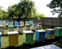 Zrenjanin: Konkurs za pčelare