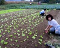 Žene u organskoj poljoprivredi