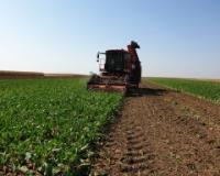 Počela kampanja: Sunoko će preraditi 1,4 miliona tona šećerne repe
