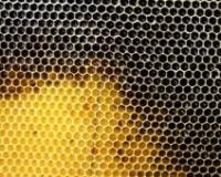 LOŠ ZA PČELE, ODLIČAN ZA LJUDE