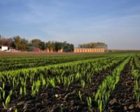 Setva pšenice još nije završena