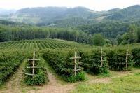 Crnogorski poljoprivrednici posetili malinare u Srbiji