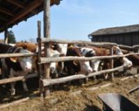 Stočari na mukama zbog izvoza i uvoza mesa