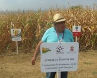 Dani kukuruza u Šumadiji - berba počinje ove nedelje