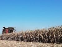 Zaključeni prvi ugovori za kukuruz novog roda, cena 24 dinara po kilogramu